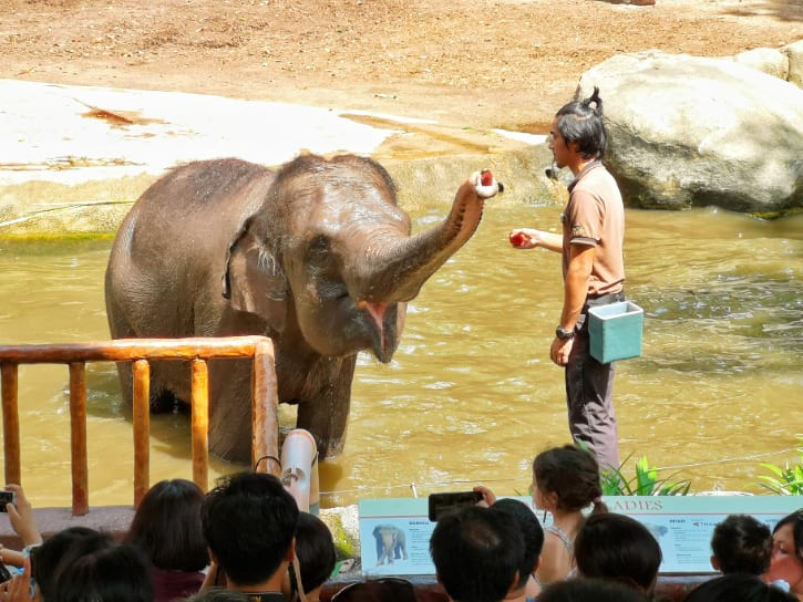 Elephants of Asia Show