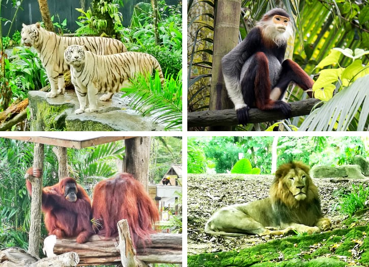 Singapore Zoo Animal Theme Park